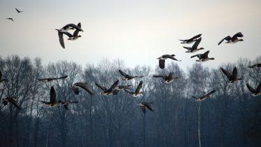 Conoce a los animales que migran