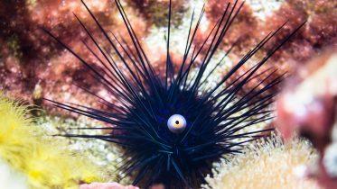 Cómo nacen los erizos de mar