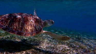 Qué animales marinos están en peligro de extinción